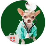 Pet vaccination services for cats, dogs and some small animals.