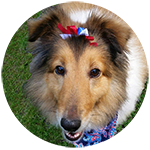 Pet spaying and neutering services for cats and dogs.