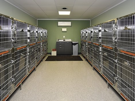 Clinic kennel rooms with individual temperatures.
