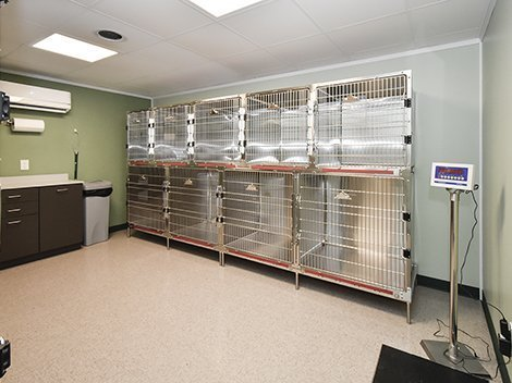 Sevierville animal clinic weigh-in room.