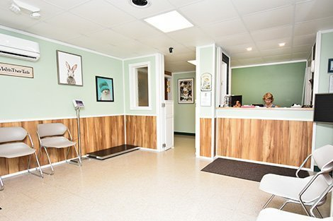 Lobby at Kindness Counts non-profit animal clinic.