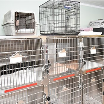 Pet Kennels for pre-post op holding