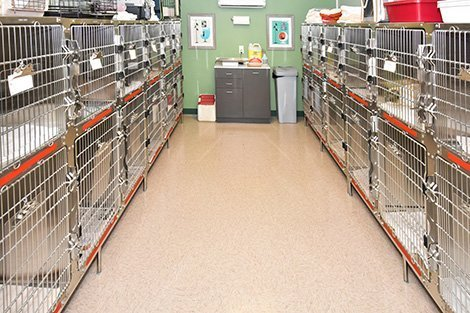 Cat and dog kennels at the clinic.