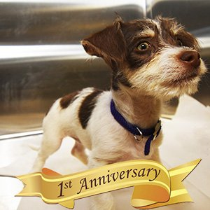 Kindness Counts Anniversary Puppy